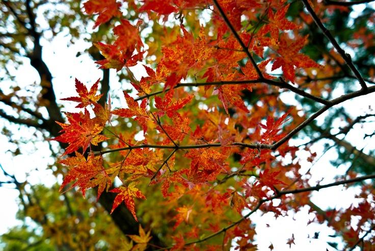 Last autumn in Nikko, Japan