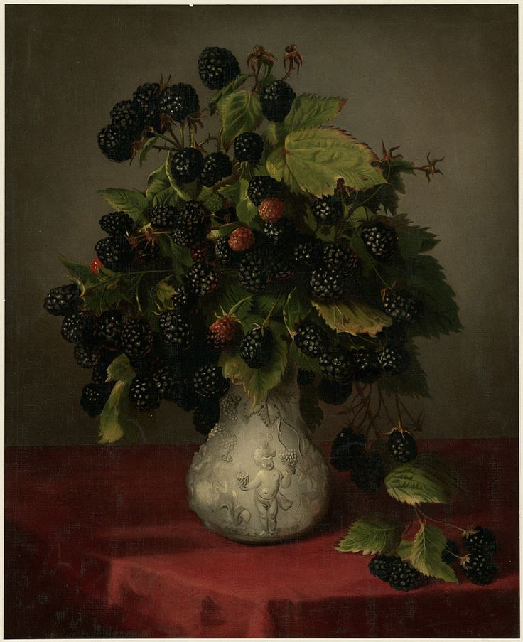 Blackberries in a Vase by Lily Martin Spencer. Chromolithograph issued by Louis Prang & Co (1861-1897).