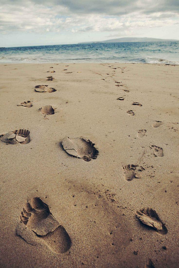Random Inspiration 135 On The BeachLeatherback TurtleBeach