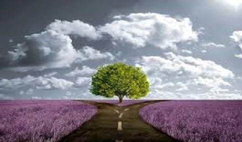 http://angelasilvestre.com/e/blog-decisao-certa-ou-acertada Hoje gostaria de te falar sobre DECISÕES.  Quando tomas uma decisão, tentas tomar a decisão CERTA ou a mais ACERTADA?
