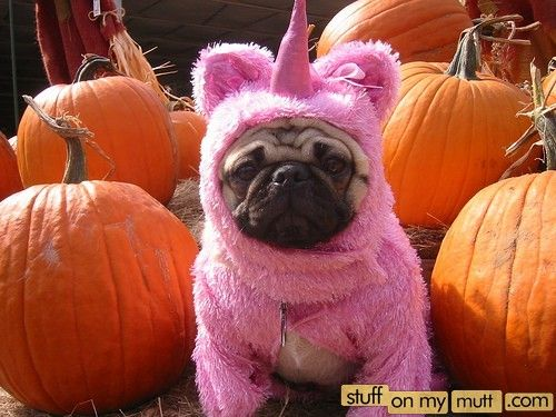pug-icorn. One of my favorite funny pug pictures :)
