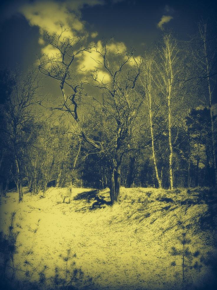 the forest in Grudziądz