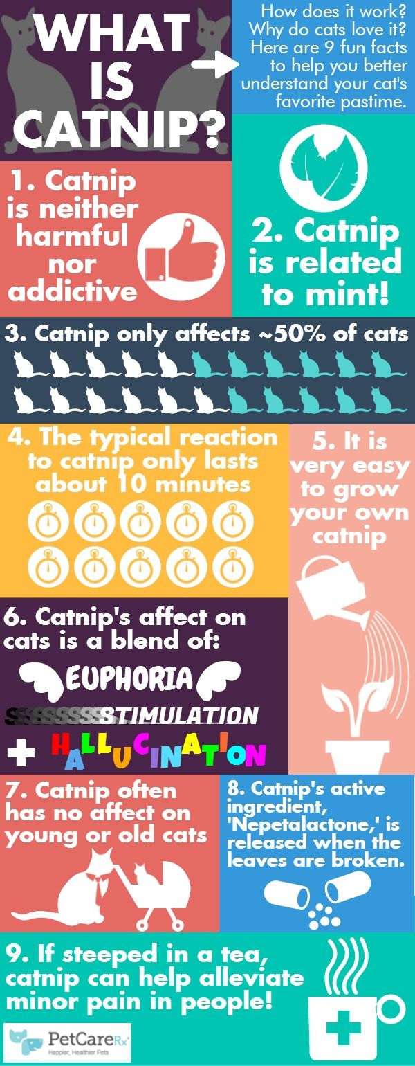 Catnip Infographic --- Know the facts about catnip, one of the most widely known treats for your kitty! --- Stop by the Humane Society of Fremont County to meet some sweet adoptable cats and dogs in Canon City, CO. http://www.humanesocietyfremontcounty.org/