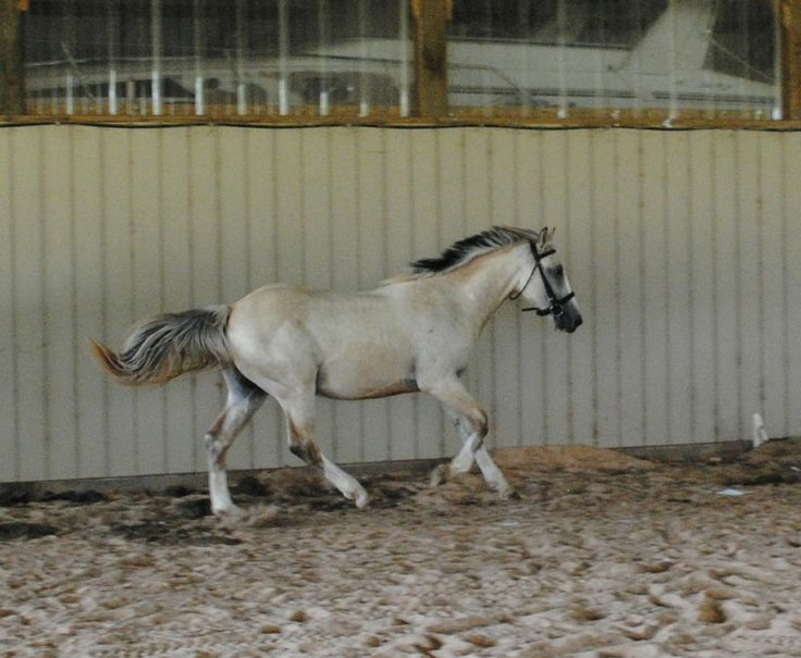 paint clydesdale - photo #24