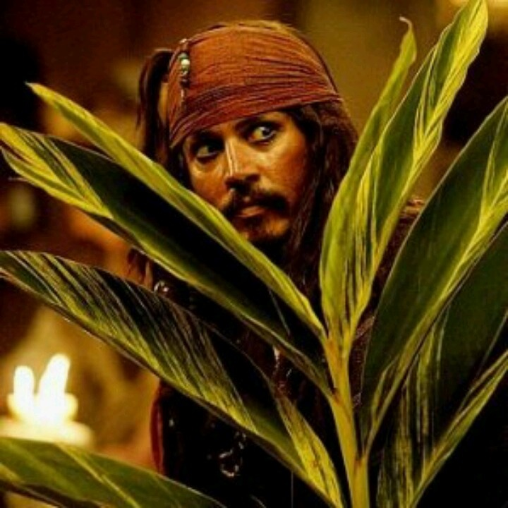 """""""You're Hired!"""" ~Sparrow to J. Norrington"""