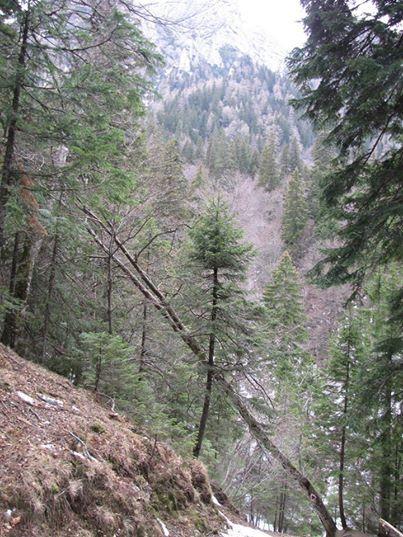 Landscape in Carpathian Mountains