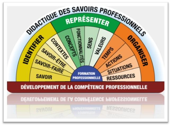 shema competences cv
