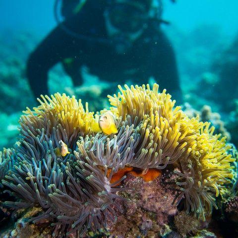 Pemba Island, Zanzibar, Tanzania. One of the Top dive sites in the world | via #UnderwaterWorld