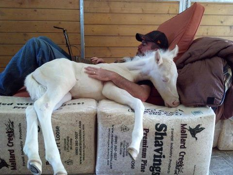 Oh my, how sweet..: This Man, Quarter Hors, Animal Pictures, Sweet, Ponies, Horse, Naps Time, Baby Hors, Calgari Stamps