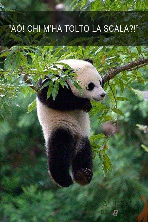 Ao... Chi m ha tolto la scala!?