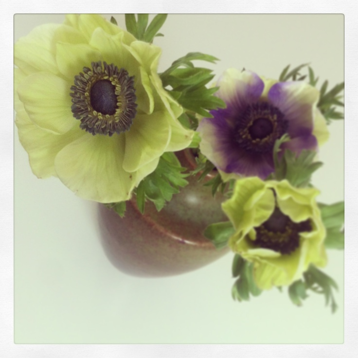 French anemones