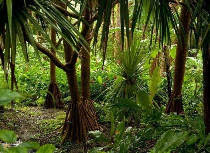 Сады Андромеды – #Барбадос (#BB) Ботанический сад с удивительными цветами  и деревьями  ↳ http://ru.esosedi.org/BB/places/1000468074/sadyi_andromedyi/