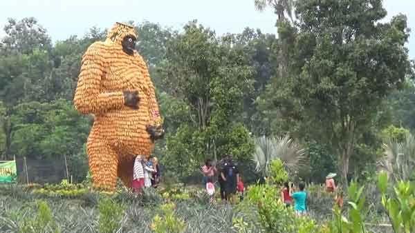 Patung Gorila Raksasa Dari Jagung Untuk Menarik Wisatawan