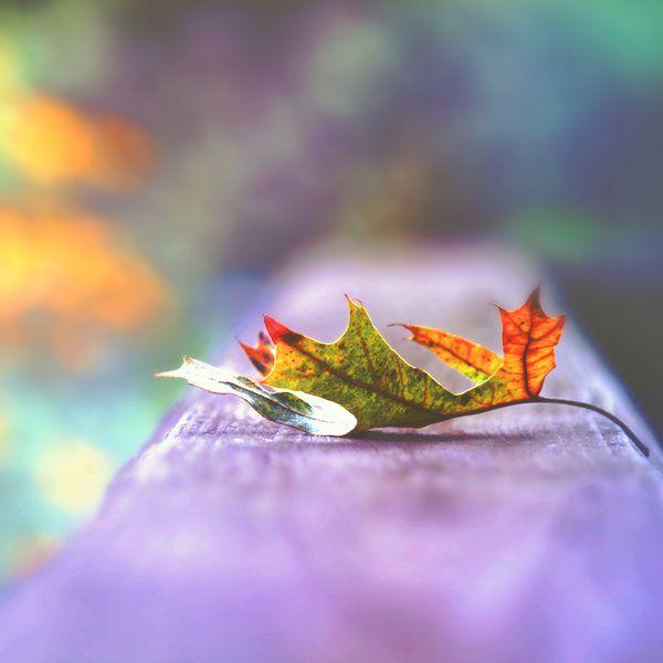 Glimpse of Autumn