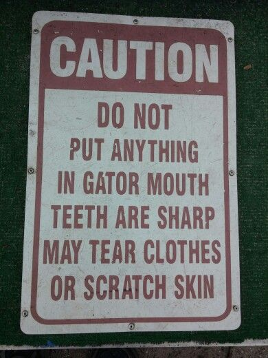 Warning! #warning #alligator #gator #sharpteeth #teeth #warningsign #lol