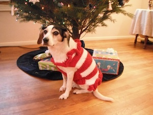 Daisy in her Christmas sweater