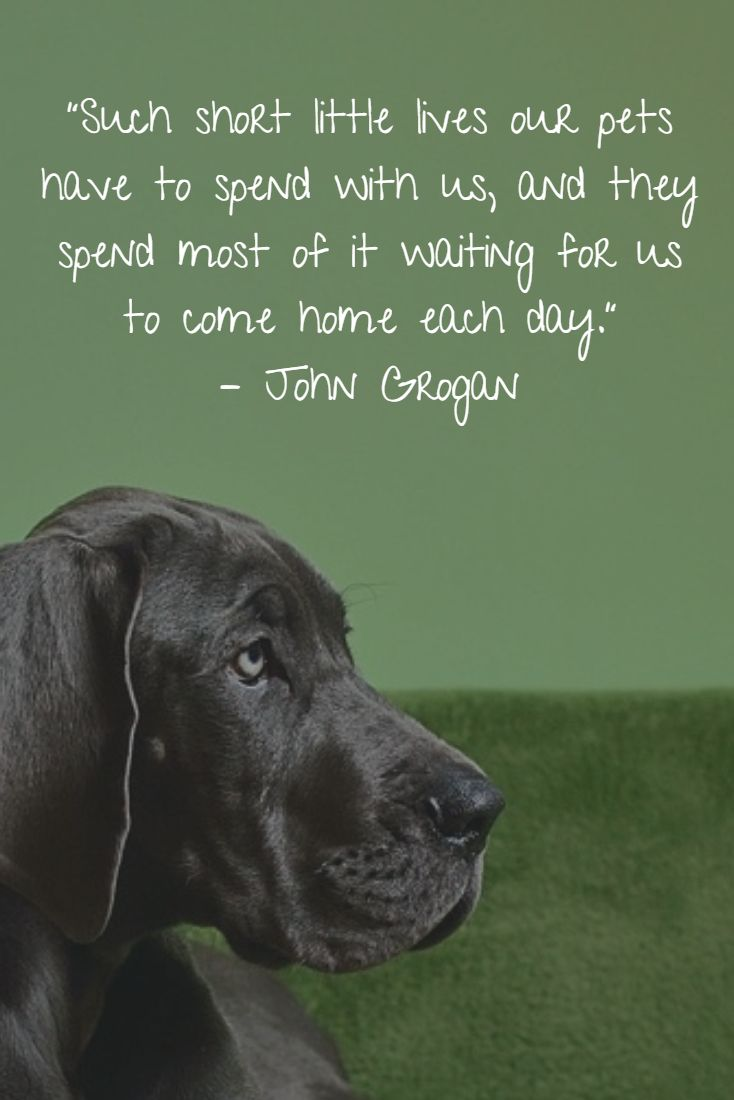 17 Best Losing A Dog Quotes On Pinterest