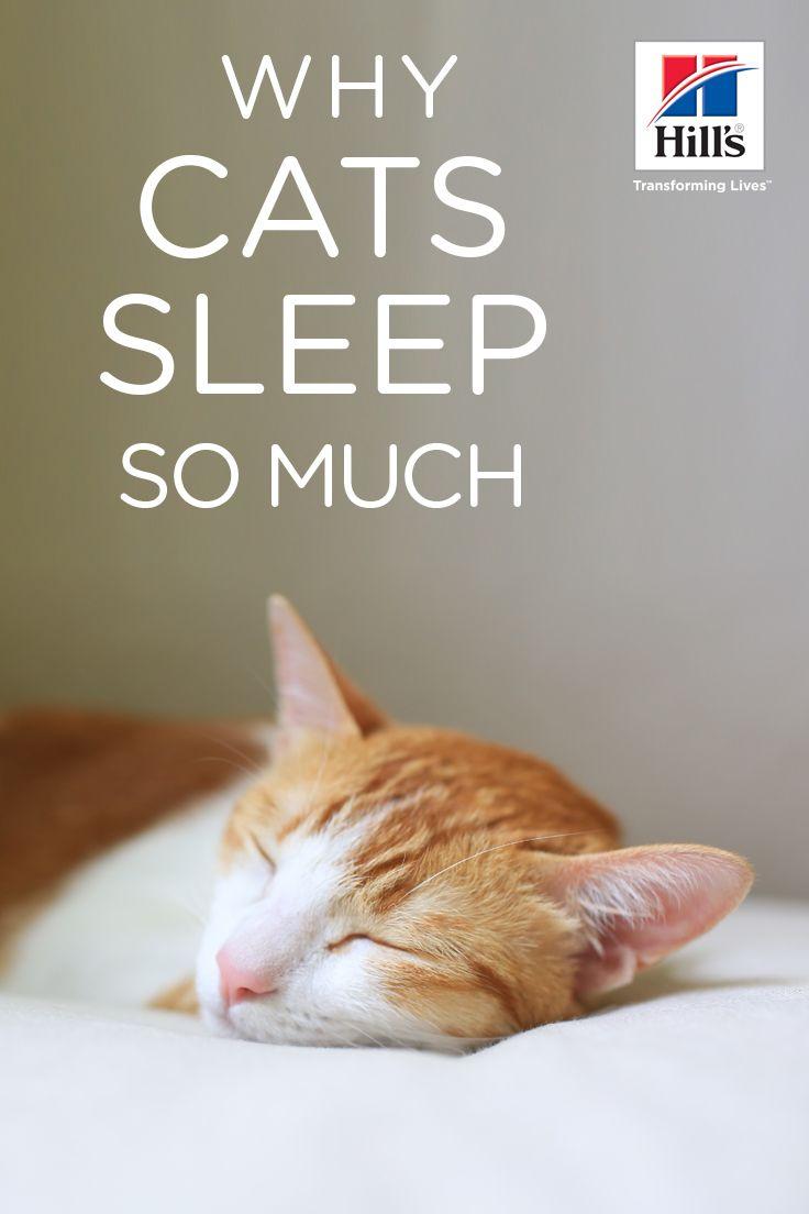 Dexknows Dexknows S Photos Facebook Sleeping Kitten Catnip Cat Toy Cat Sleeping