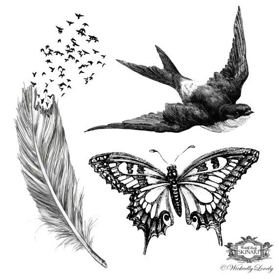 Wings, Assorted set 2, Feather with birds tattoo, butterfly tattoo, swallow tattoo  Skin Art, Body art, Temp Tattoos, includes 3 tattoos.