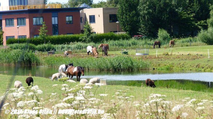 """Nog een """"ongerept stukje natuur"""" bij Alkmaar ... voor hoe lang nog .... 😉"""