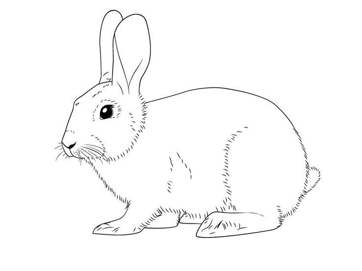 Картинка заяц срисовать