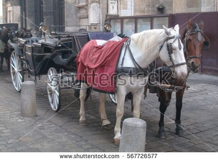 White and brown fiaker horses in Vienna.