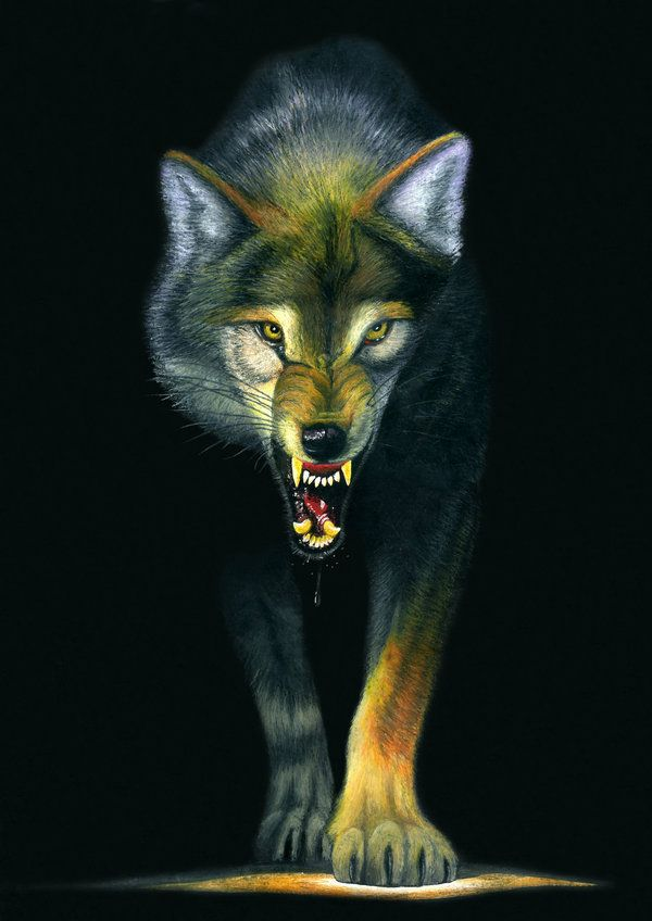 Wolf Drawing 548440360 furthermore Wolf Species Have Howling Dialects as well Imagenes Tipo Mandala Colorear Ninos No Tan Ninos together with 2033 likewise Tattoo Designs For Men. on realistic drawings of wolves