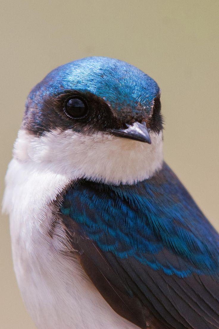 Birdie 36 by Tibor Skarupa on 500px