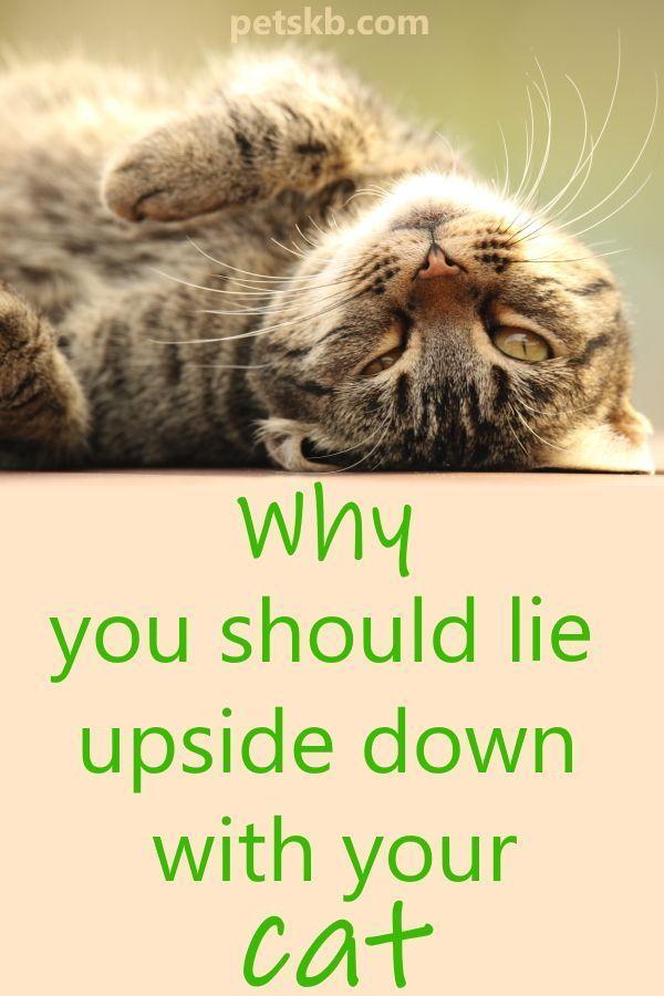 59b2eb8b8117c2466422b6b3b4337b13 - How Do You Get A Cat To Calm Down
