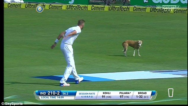 England bowler Stuart Broad also tried to coax the animal from the outfield in Visakhapatnam