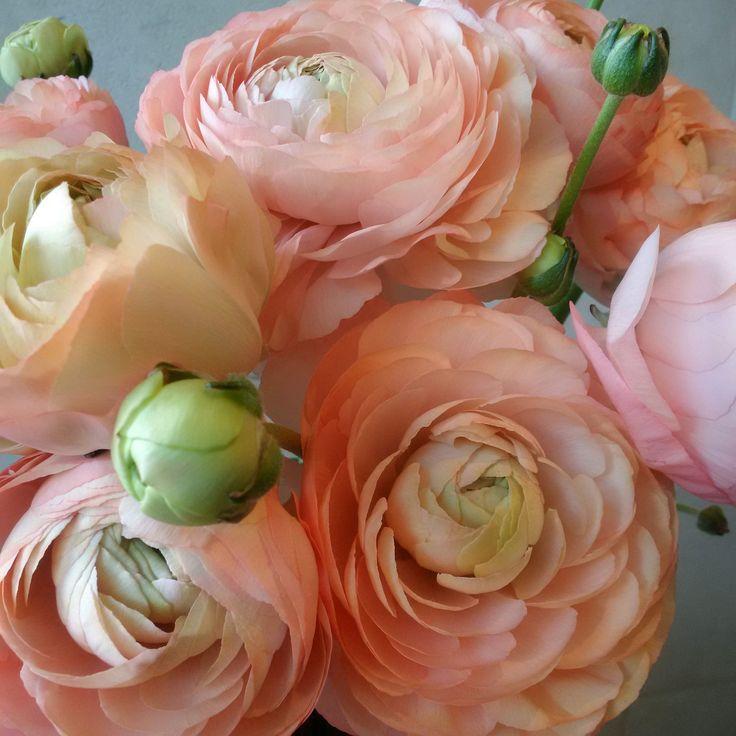 Peach Ranunculus