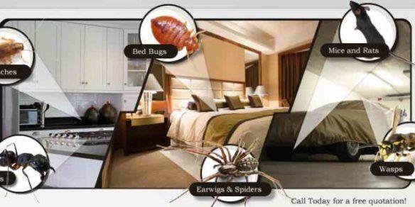 التلوث ومكافحة الحشرات ورش المبيدات المدينة المنورة Bed Furniture Home Decor