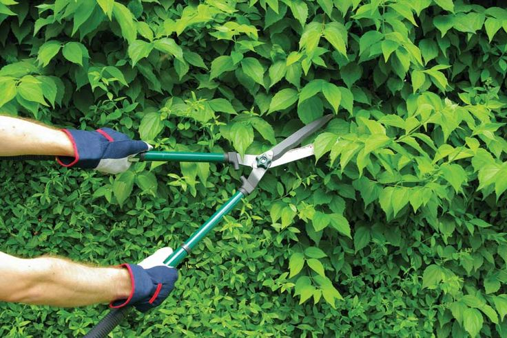 Be sure you have suitable basic pruning tools on hand for pruning chores all times of the year.