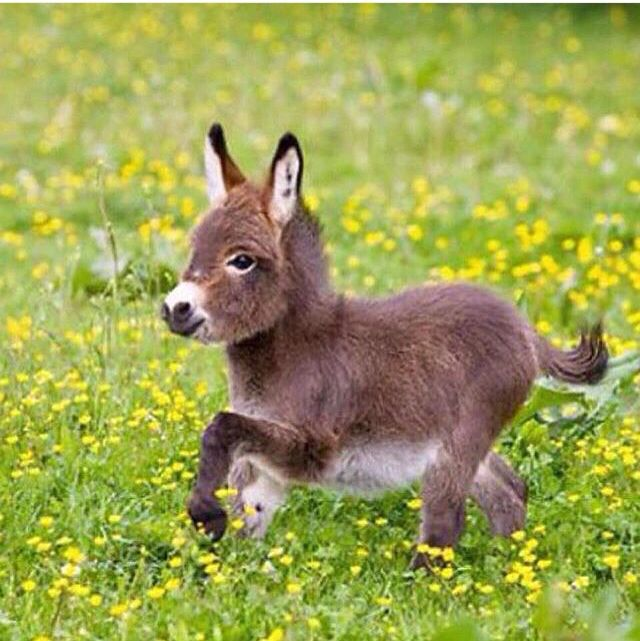 Ohhhhhh MY what is this adorable little animal ?  <3