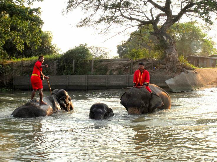 Beauté Brune: Thaïlande # 1: Ayutthaya, Lopburi et Phitsanuloke