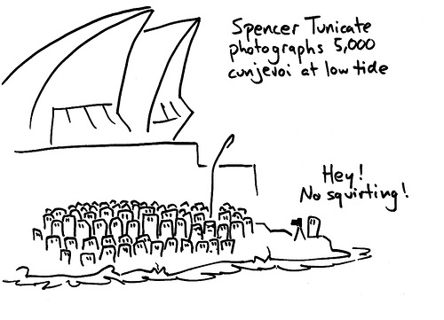 Tunicates by mr Lynch
