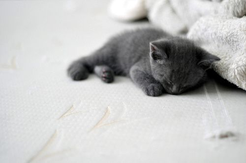 Adorable sleeping kitten