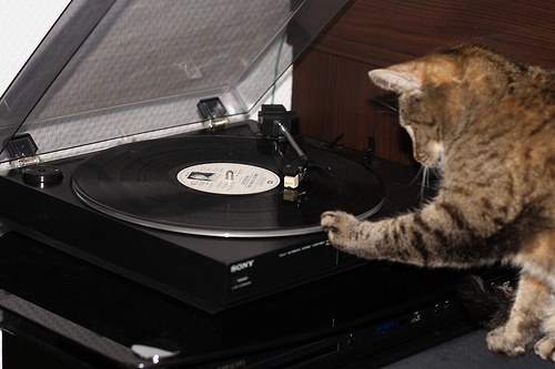 DJ Mimi spins Kate Bush