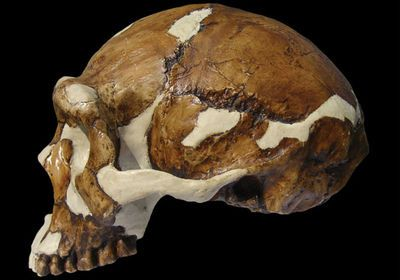 Peking Man A series of fossils from a hominid species named Homo erectus pekinensis (more popularly known as Peking Man) were excavated in the 1920s and 1930s at Zhoukoudian cave in China. They dated back about half a million years. In 1937, Japanese troops invaded China; in 1941, the fossils were packed into crates in an attempt to ship them to safety in the United States. What happened afterward is unclear, but many scholars believe that the fossils were lost en route to America.