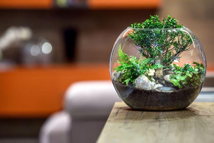Os terrários com suculentas estão super em alta na decoração de ambientes, Eles dão um toque de charme e são muito simples de fazer. Veja o passo a passo!