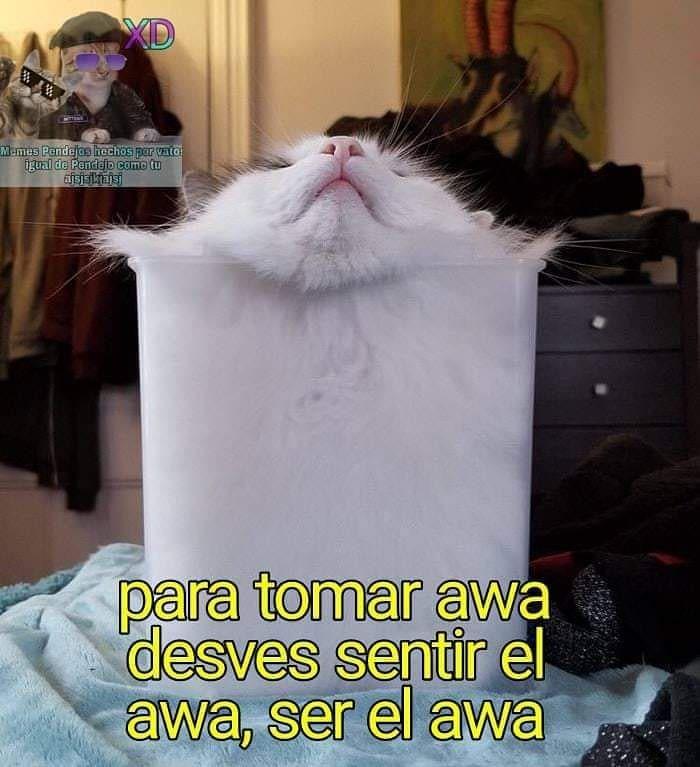 Los Chistes Tontos Me Dan Risa Gatos Gato Cat Tiernos Memes Memesgatos Lindos Cat Cats Cats Of Instagram Cats Memes Divertidos Memes Meme Divertido