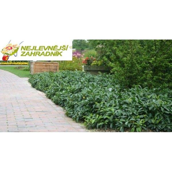 zahradnictví, balkony, terasy, levné keře