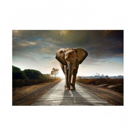 Trendhopper Schilderij Olifant 60 x 90 cm