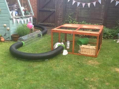 17 best ideas about indoor guinea pig cage on pinterest for Indoor pig pen ideas