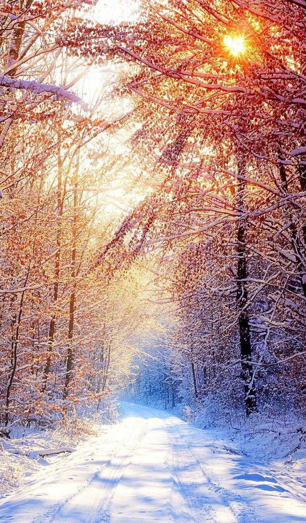 Скачать обои дорога, зимнее утро, снег, лес, раздел природа в разрешении 600x1024