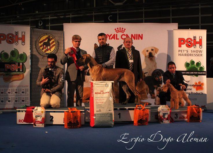 36 Exposicion Canina Internacional de Valencia