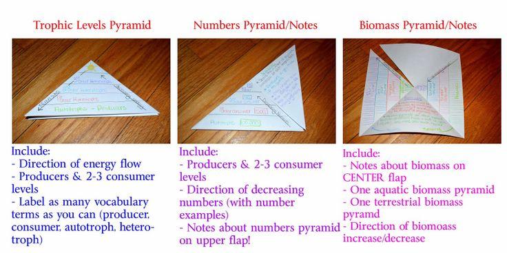 Ecological pyramid foldable