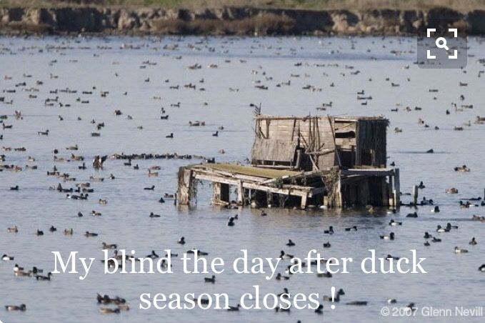 Day after duck season closes!
