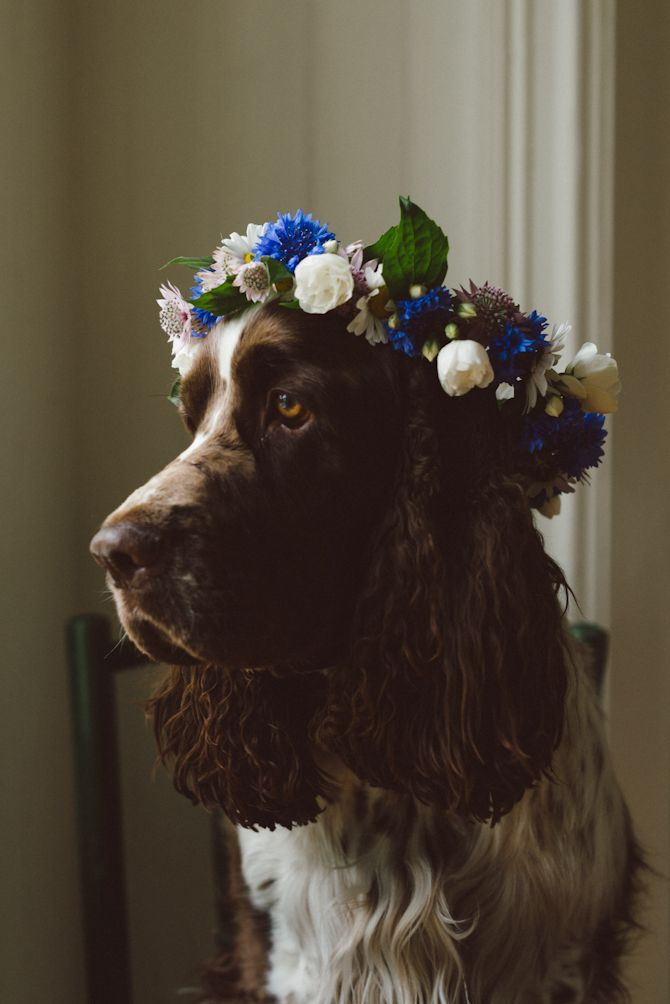 Swedish Midsummer by Babes in Boyland --the doggies? but with red instead of blue