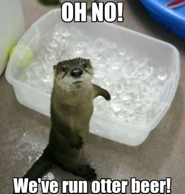 Good Morning Otter Meme : Best images about beer ds on pinterest meme and